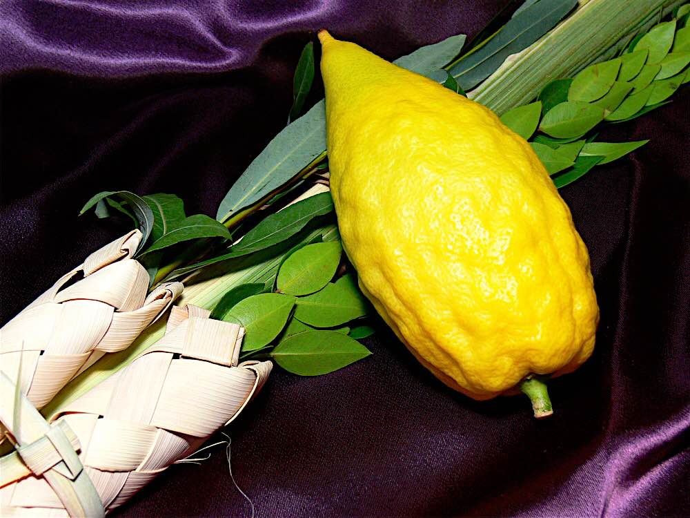 Etrog and lulav symbols of Sukkot